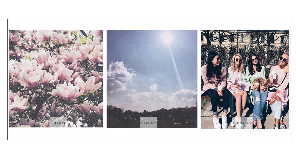magnolien blute englischer garten München hofgarten lifestyle blog